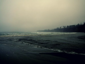 A much, damper, environment on the B.C. coast (Spring 2014).