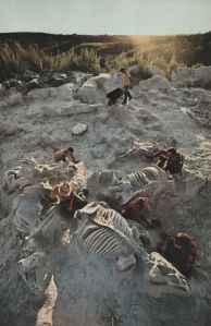 Truly spectacular; a dig site full of dinosaur skeletons. Image from Pinterest: http://www.pinterest.com/pin/71987294019516707/